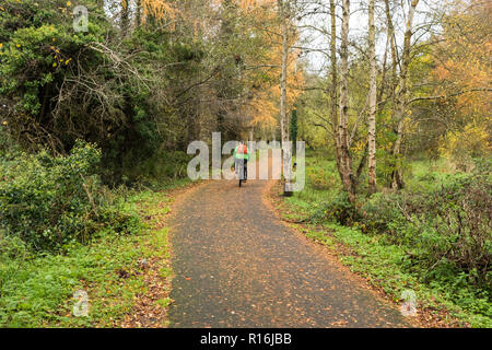 Belfast, N.Ireland, 9th November, 2018. UK Weather: A cyclist makes his way along the towpath. Windy weather sheds more leaves from the trees on the Lagan towpath near Shaw's Bridge in South Belfast. Dry in the afternoon but heavy rain and stronger winds on the way. Credit: Ian Proctor/Alamy Live News - Stock Image