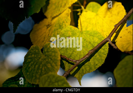 Leaves on Autumn colors - Stock Image