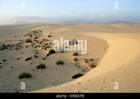 Sunrise Sand Dunes, Corralejo National Park, Fuerteventura, Canary Islands - Stock Image