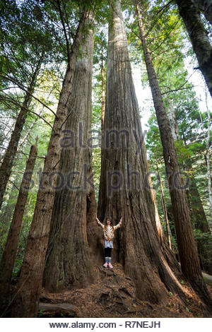 Young girl stands in the middle of a group of trees along the Lady Bird Johnson Grove Trail in the California Redwoods National Park in coastal Northw - Stock Image