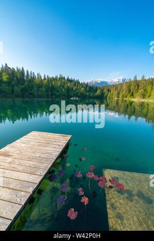 Trees mirrored in the pristine Cresta lake (Crestasee) seen from platform, Films, canton of Graubunden, Switzerland - Stock Image