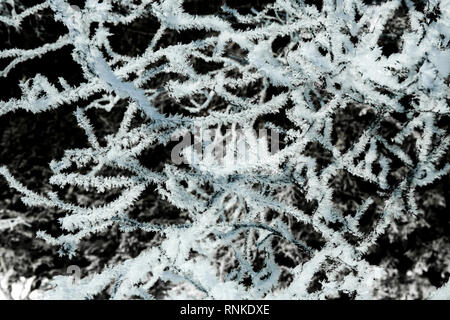 Frosted tree branches. Frozen - Stock Image