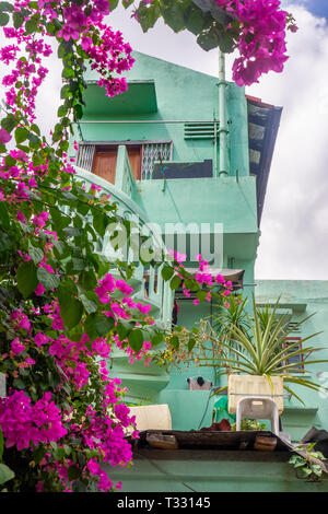 Bougainvillea creeper growing in the courtyard next to a dwelling with a spiral staircase in Joo Chiat Singappore. - Stock Image