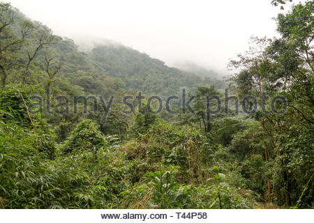 Tropical cloud forest in Guanacaste province of Costa Rica - Stock Image