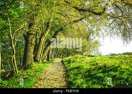 Nature trail in a green forest at springtime with trees hanging down over the path - Stock Image