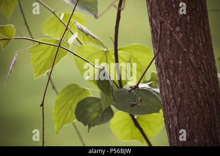 Photo of leaves against soft green background with the trunk of a small tree in focus - Stock Image