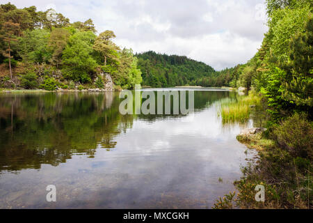 Trees reflected in clear still waters of Llyn y Parc lake in Gwydyr Forest Park in Snowdonia National Park. Betws-y-Coed, Conwy, North Wales, UK - Stock Image