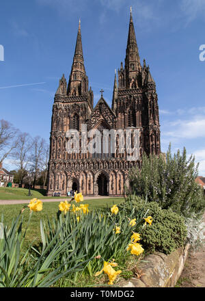Lichfield Cathedral with daffodils in the foreground pictured on the first day of Spring - Stock Image