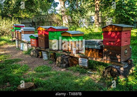 Italy Piedmont Turin Valentino botanical garden -  Tree Grove -beehives - Stock Image