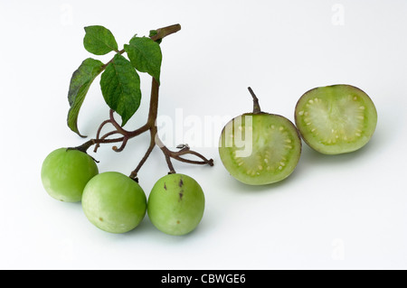 Potato (Solanum tuberosum). Stalk with small green fruit and laved fruit, studio picture against a white background. - Stock Image
