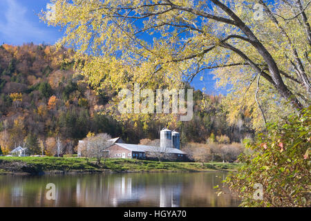 A farm on the Connecticut River in Maidstone, Vermont.  Silver maple.  Fall. - Stock Image
