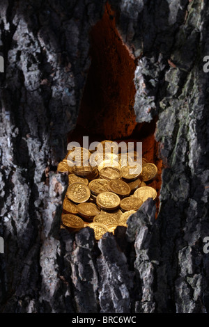 Gold pound coins in tree trunk - Stock Image