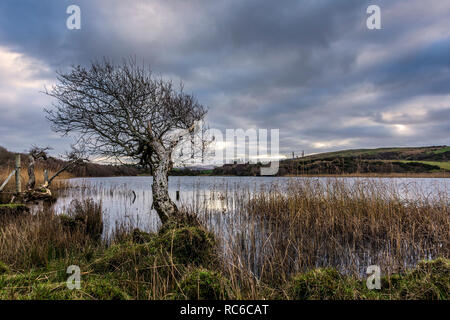 Ardara, County Donegal, Ireland. 14th January 2019. A generally overcast day by Lake Shanaghan, but still an unseasonally warm 12 centigrade on the north-west coast. Credit: Richard Wayman/Alamy Live News - Stock Image