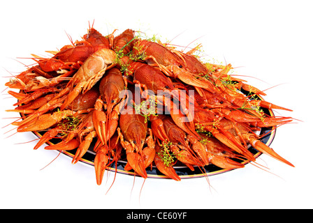 Crayfish cooked in dill arranged on a plate - Stock Image