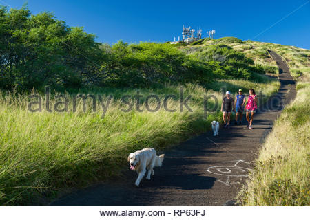 People with dogs walking down access road from the summit of Koko Head, Koko Head District Park, Hawaii Kai, Oahu, Hawaii, USA - Stock Image