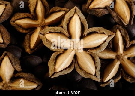 dried sacha inchi on white background - Stock Image
