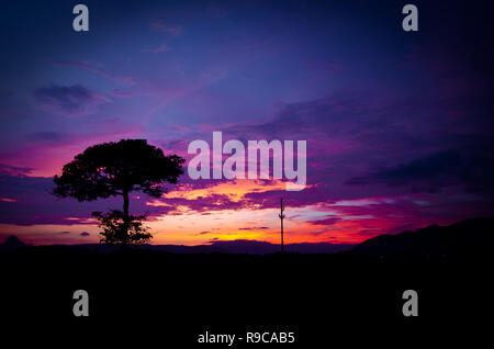 Colorful sunset and silhouette lone tree - Stock Image