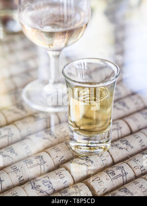 SETUBAL, PORTUGAL – AUGUST 25, 2018: Portuguese moscatel wine ina shot glass offered during wine tasting in Quinta de Alcube in Setubal region, Portug - Stock Image