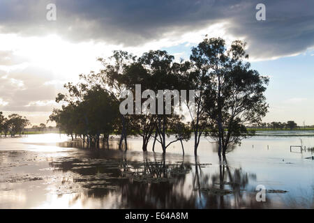 Trees & flooded creek, nr Rockhampton, Queensland, Australia - Stock Image