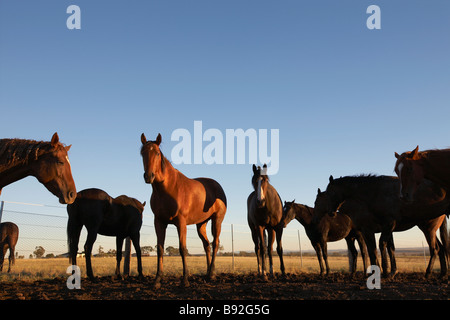 Group of horses in a paddock - Stock Image