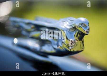 Westbury, New York, USA. June 12, 2016.  Flying Lady hood ornament close up on black vintage Cadillac is on display - Stock Image