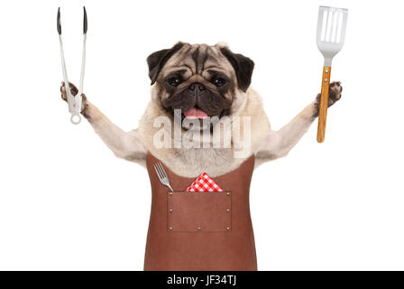 smiling pug dog wearing leather barbecue apron, holding meat tong and spatula, isolated on white background - Stock Image