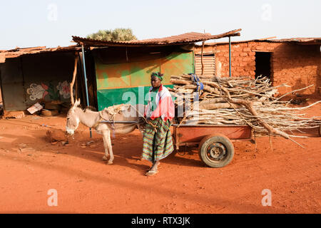 A a woman leads a donkey cart piled high with firewood in a village near Bobo-Dioulasso in the west of Burkina Faso - Stock Image