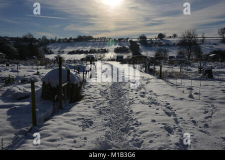 Following a heavy snowfall a view of snow covered allotments in the north Oxfordshire village of Hook Norton - Stock Image