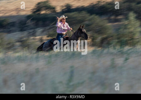 USA, California, Parkfield, V6 Ranch roping cowgirl on the run on her horse (MR) - Stock Image