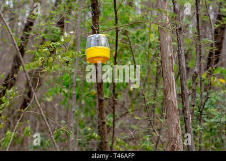 Side bottom view of a yellow pheromone fly trap hanging from a tree. - Stock Image