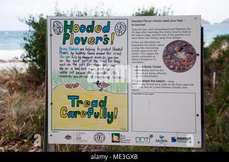 Hooded plover conservation initiative by local schoolchildren at Adventure Bay, Bruny Island, Tasmania, Australia - Stock Image