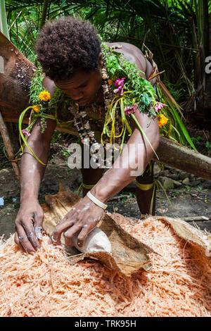 Demonstration of making Sago, Tufi, Oro Province, Papua New Guinea - Stock Image