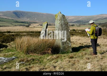 Man standing next to Cerrig Meibion Arthur standing stones  checking location on map Cwm Garw stones Preseli Hills Pembrokeshire Wales Cymru UK - Stock Image