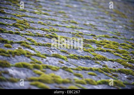 Old tiled rooftops, UK - Stock Image