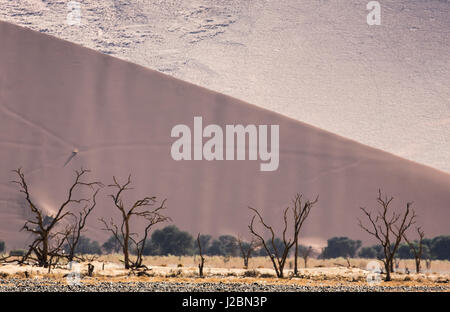 Africa, Namibia, Namib-Naukluft Park. Sand dunes and skeleton trees. Credit as: Wendy Kaveney / Jaynes Gallery / - Stock Image