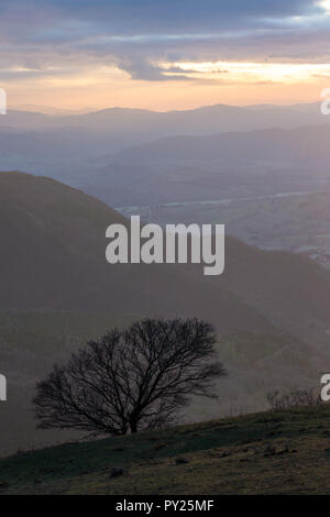 A lonely tree on a mountain cliff, with others mountains and mist on the background, with warm sunset colors - Stock Image