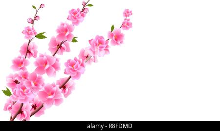 Sakura close up. Decorative flowers of cherry with buds on the branches, a bouquet. Can be used for cards, invitations, banners, posters. illustration - Stock Image