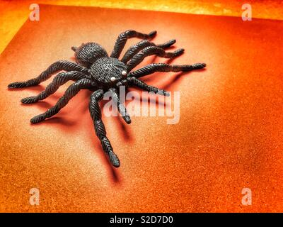 Hallowe'en themed big black spider on an orange background with copy space - Stock Image
