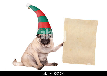 Christmas pug puppy dog sitting down and wearing elf hat, holding paper scroll, isolated on white background - Stock Image