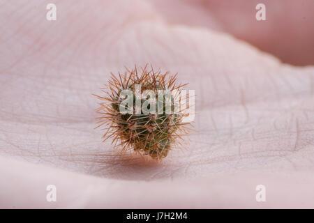 Tiny cactus - Stock Image