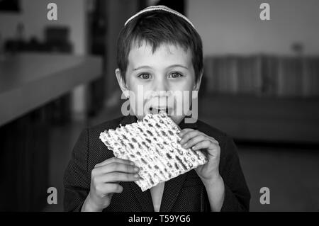 Cute Caucasian child in a kippah taking a bite from a traditional Jewish matzo unleavened bread in a room. Black and white image. - Stock Image