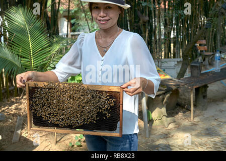 Bees. Woman holding a frame with a colony of Eastern honey bees, Apis cerana, at a  Thailand bee farm, Southeast Asia - Stock Image