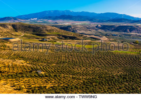 Olive groves near Zujar, Granada Province, Andalusia, Spain. - Stock Image