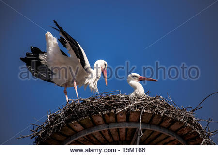 The Storks at home - Stock Image