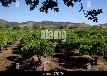 Portugal, Algarve, Near Silves, Countryside & Orange Trees - Stock Image