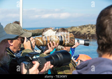 A wildlife watching boat off the Farne Island near Seahouses on the Northumberland coast. - Stock Image
