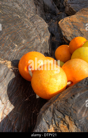 Orange bouys washed ashore at South Milton Sands, Devon - Stock Image
