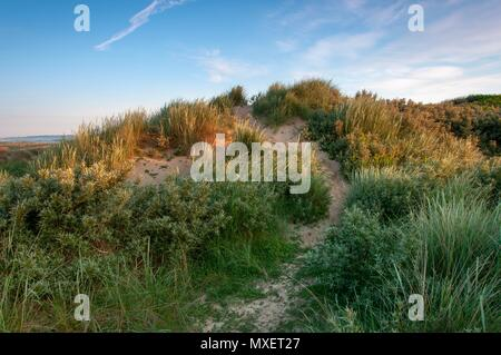 A path leading a small sand dune at sunrise in the south of England - Stock Image