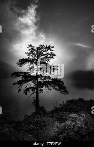 Misty Foggy Mountain Lake With Lone Tree - Stock Image
