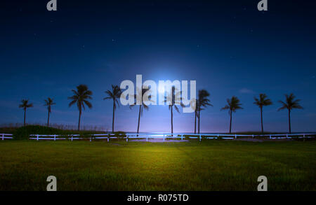 A beautiful full moon rises over a bank of coconut palm trees on Fort Lauderdale Beach. - Stock Image